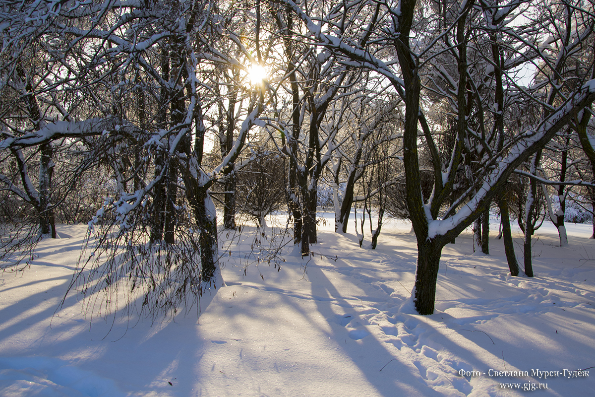 Зимний пейзаж. Фото - Светлана Мурси-Гудёж