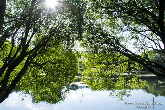 Пронизаны солнечным светом…Дубки