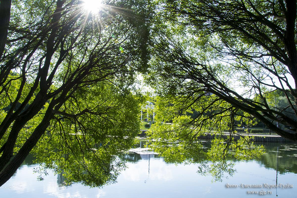 """Лето 2018 г. в парке """"Дубки"""". Фото - Светлана Мурси-Гудеж"""